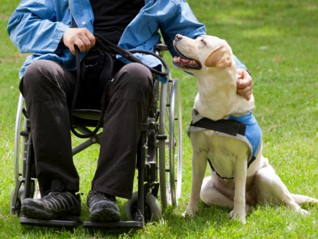 Perros de asistencia para personas con discapacidad